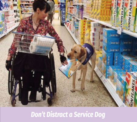 Don't Distract a Service Dog ADA LAW-THE TRAINING VIDEO